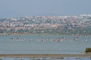 img_1894_storre-flamingo123