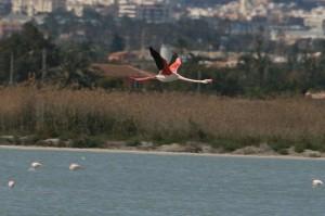 img_1589_storre-flamingo555